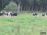 2011_Zeltlager_Hahlen_0454